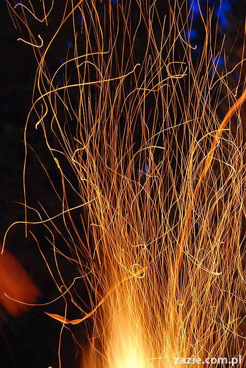 płonie ognisko w lesie, mops w ryju kiełbasę niesie