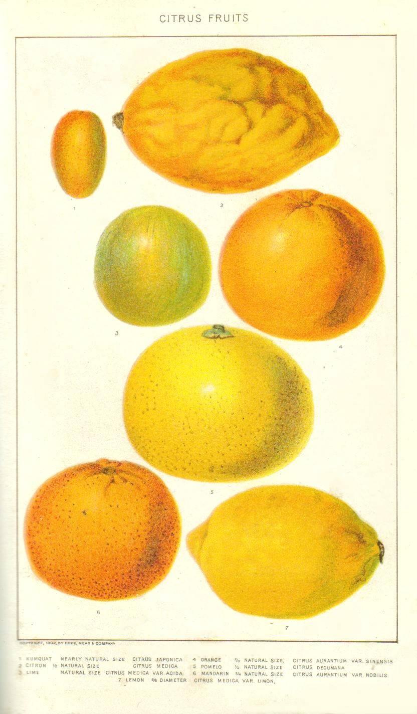 Master Cleanse [Lemon Detox Diet] – czyli wszystko, co chciałybyście wiedzieć o diecie lemoniadowej, ale wstydzicie się zapytać…
