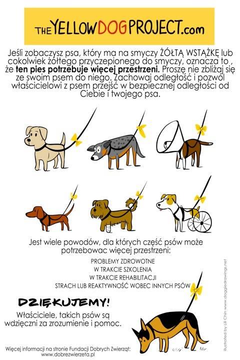 The Yellow Dog Project czyli: Miszur, mops, który naprawdę potrzebuje więcej przestrzeni