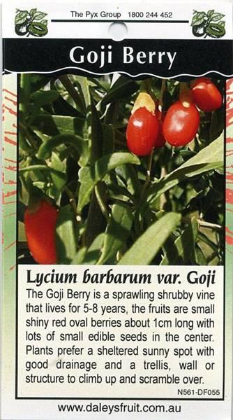 Goji-Berry-Lycium-Barbarum-var-Goji