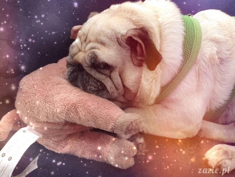 gwiezdne psy i świnia w kosmosie