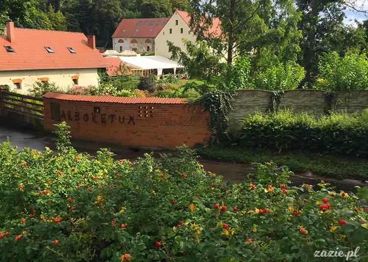 Sierpniowe Arboretum