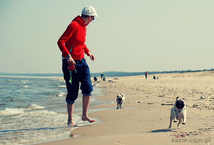 Kumok i Miszur mopsy mopsiki pugs nad morzem