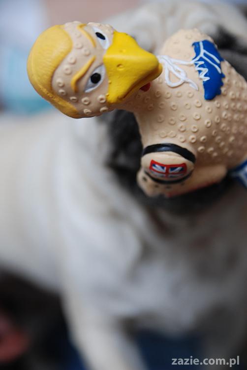 Kumok i Miszur mopsy pugs latający mops