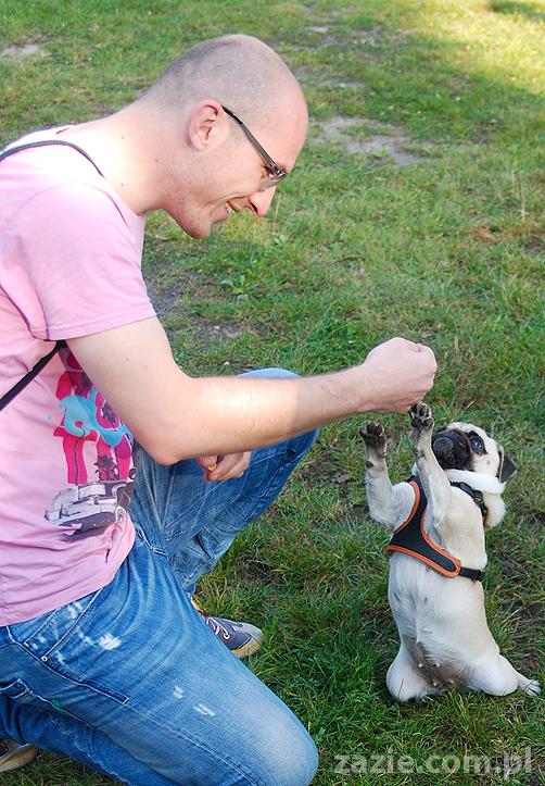 mops mopsy pugs Jesienne Warszawskie Spotkanie Mopsiarzy 2011 Forty Bema Miszur Kumok