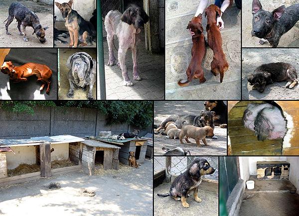 psy w schronisku dla bezdomnych zwierząt