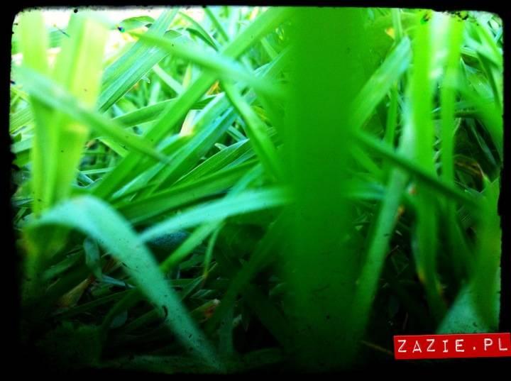 wiosna_na_ochocie_01