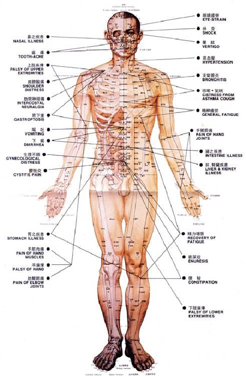 akupunktura_meridiany