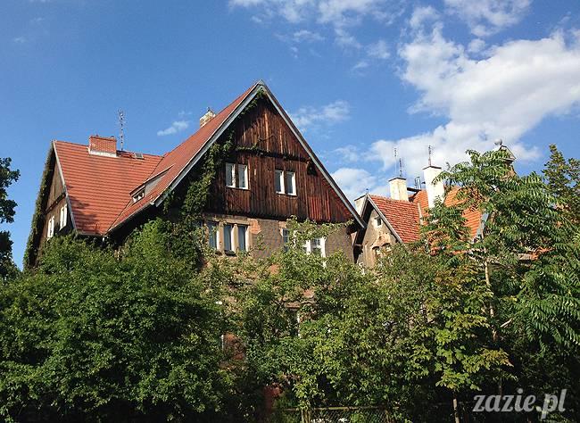 wakacje z mopsami, Wrocław, Zazie Syd Kumok Miszur lipiec 2015