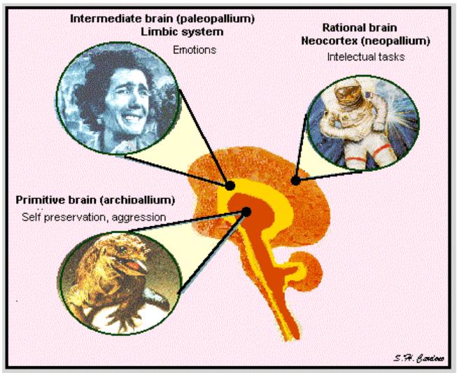 triune_brain_hypothesis