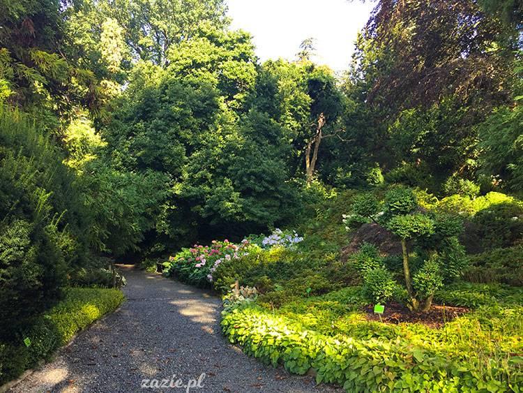 Sierpniowe Arboretum Zazie